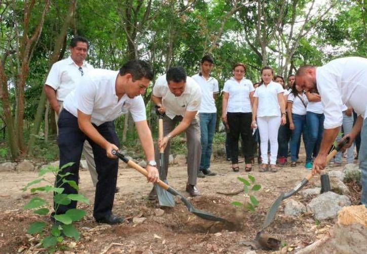 La Conafor y varias organizaciones de comunicadores pretenden impulsar acciones de reforestación en Mérida y otras partes de Yucatán. (SIPSE)