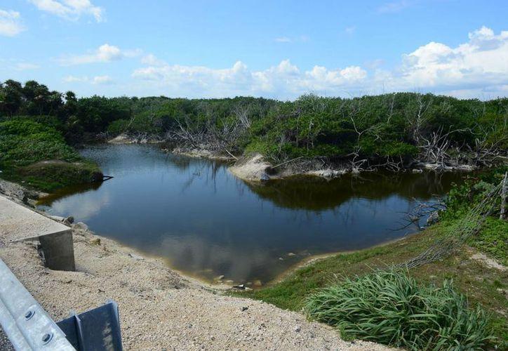 Chen Río es solo una pequeña muestra de los vastos espacios de  manglares y humedales que tiene Cozumel. (Gustavo Villegas/SIPSE)