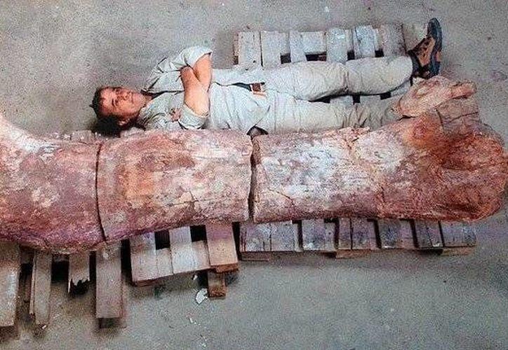 Un hombre junto al fémur de un dinosaurio encontrado en la provincia argentina de Chubut, cerca de la localidad de Las Plumas. (EFE)