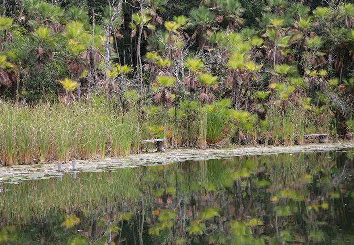 Las afectaciones del manglar seguirán si no se hace nada al respecto. (Foto: Luis Soto/SIPSE).