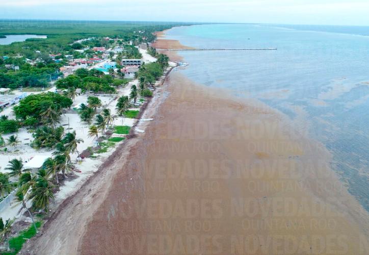 Una inmensa alfombra café se puede observar entre las playas y la barrera arrecifal. (Israel Leal/SIPSE)