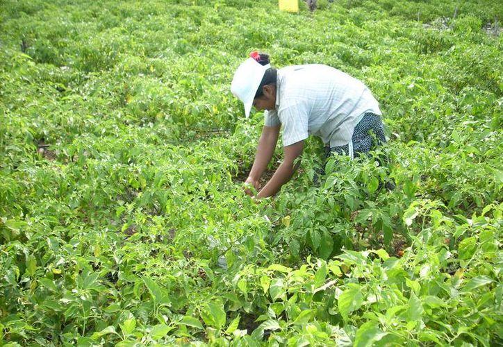 Es necesario que las autoridades quintanarroenses abran el abanico de actividades en ese sector. (Redacción/SIPSE)