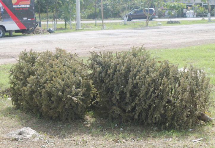 Exhortan a la población a denunciar a las personas que no continúen dejando sus árboles en las calles, parques y avenidas. (Jesús Tijerina/SIPSE)