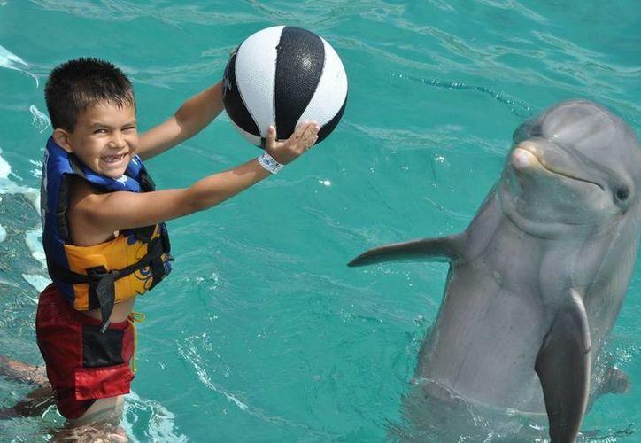 Dolphin Discovery se une a la campaña en favor de Save the Children. (Contexto/SIPSE)