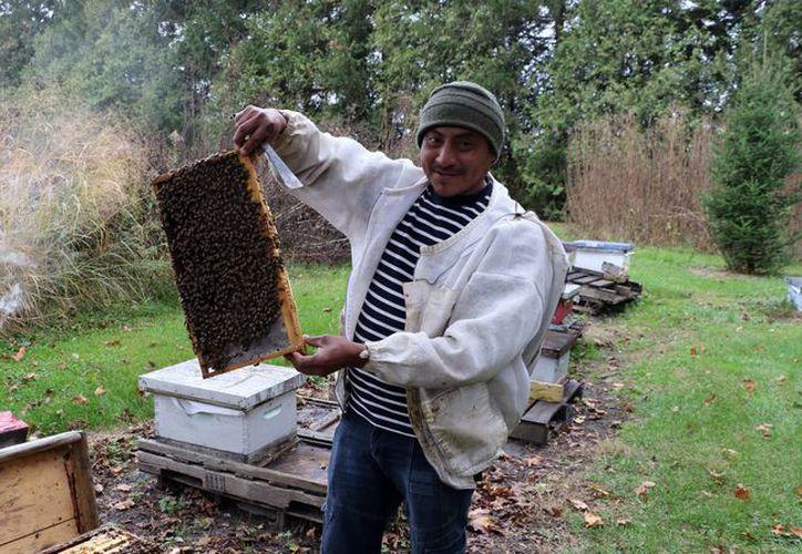 Mario Uitz produce miel y comercializa abejas reina. (Foto de Notimex)