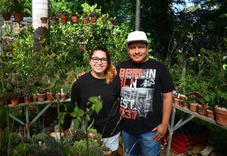 Déborah Carnevali Ramírez y Omar Góngora Guzmán ofrecen en Suculentas Dzityá una gran variedad de especies únicas.  (Milenio Novedades)