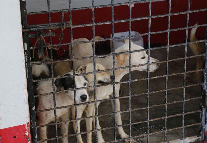 La perrera municipal continúa atendiendo a los perros. (Luis Soto/SIPSE)
