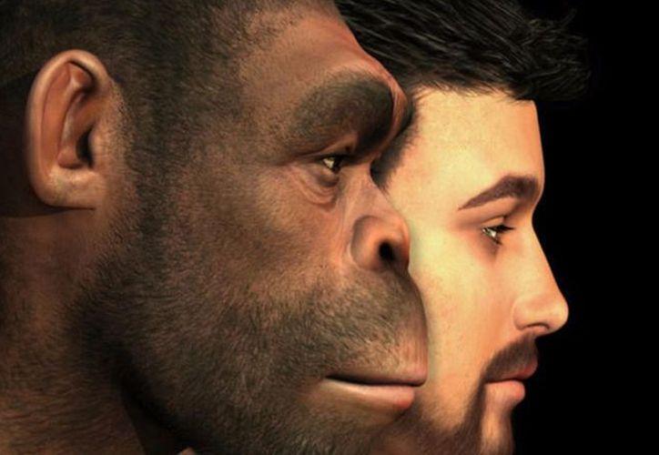 Las cejas son la parte que falta del rompecabezas de cómo los humanos modernos lograron llevarse mejor que otros homínidos. (Foto: Contexto/Internet).
