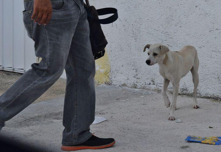 En Cozumel, es muy frecuente que las mascotas sean sometidas a lesiones. (Foto: Contexto/Gustavo Villegas)