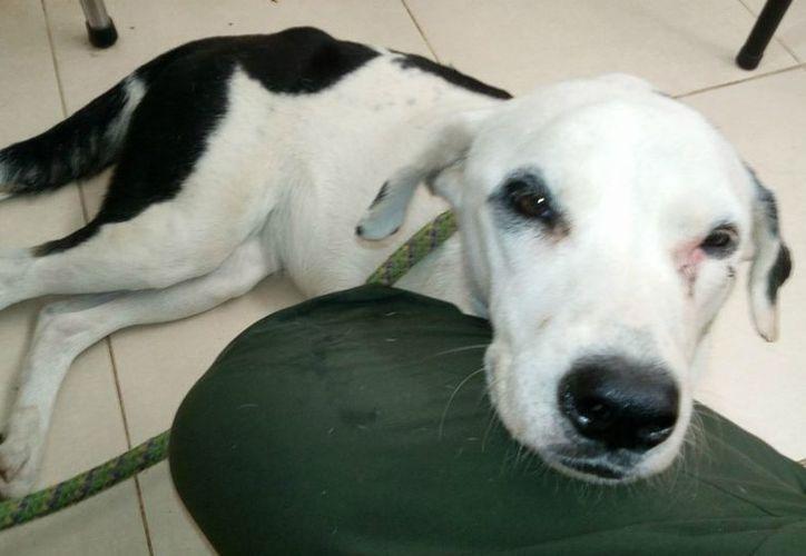 Funcionarios del aeropuerto entregaron a 'Nube viajera' a una fundación pro animal. (Foto: @josecometa3)