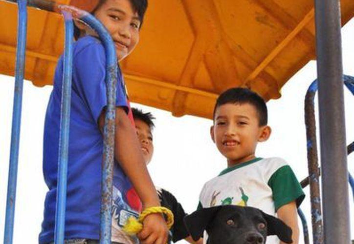 En 2011, se registraron 900 casos de mordeduras ocasionadas por perros y las estadísticas actuales van en aumento, reportando un promedio de 4 personas agredidas al día. (Redacción/SIPSE)