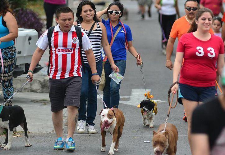 Los perros guía también pueden apoyar a pacientes con diabetes. Imagen de un evento canino en Mérida. (Milenio Novedades)