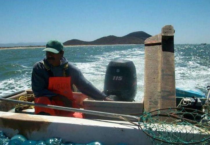 La captura de especies marinas ha bajado drásticamente luego de la contaminación provocada por el derrame petrolero de DeepWaterHorizon. (Archivo/Notimex)