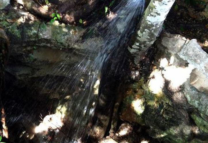 Habitantes de la colonia Ejidal denuncian que en uno de los cenotes de dicha zona se colocó un tubo que descarga aguas negras. (Juan Cano/SIPSE)