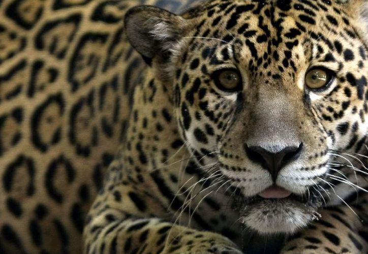 México anuncia la intención de crear la selva maya, compartida con Belice y Guatemala. (Yahoo)