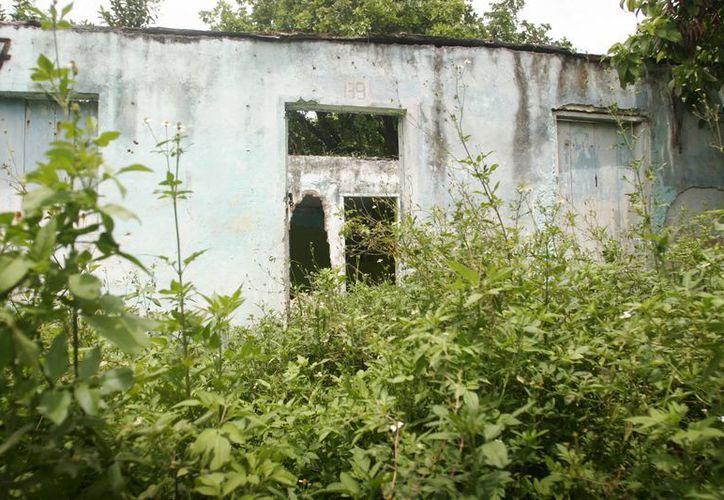 La falta de sanciones para los dueños del terreno, ha generado que éstos los mantengan descuidados. (Harold Alcocer/SIPSE)