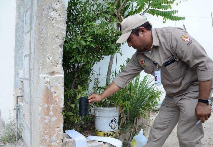 Las ovitrampas son trampas sencillas usadas en áreas urbanas para la vigilancia vectorial de Aedes aegypti. (Ángel Castilla/SIPSE)