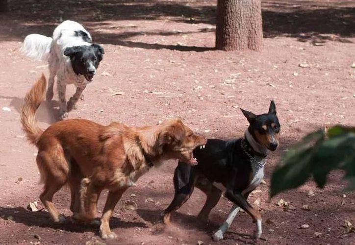 La proliferación de perros callejeros, un problema latente. (Foto: Milenio Novedades)