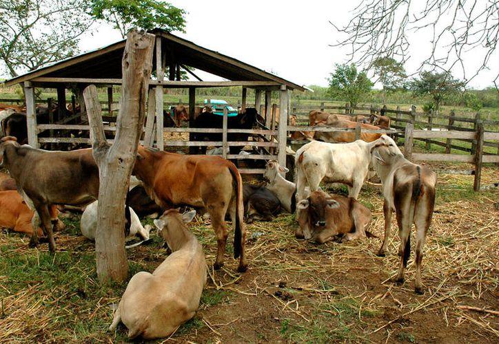 Tres municipios del estado están entregando pollinaza a los productores ganaderos.