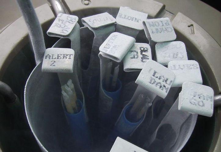 Lo que el banco de semen hace es recolectar y congelar muestras para que el paciente las utilice en un futuro. (Milenio Novedades)