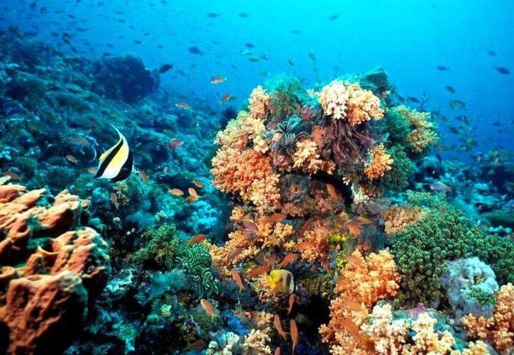 La Conapesca señaló que en el Estado se extraen 1.5 millones de toneladas de peces comerciales en Quintana Roo. (Sergio Orozco/SIPSE)