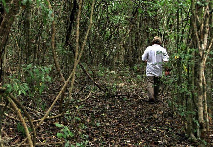 Registran severa deforestación varias zonas de la Península de Yucatán. (Milenio Novedades)