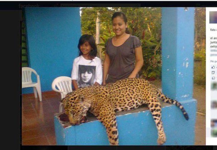 El deceso de un jaguar en el municipio de Bacalar fue 'ventilado' en las redes sociales, despertando el repudio de decenas de usuarios. (Redacción/SIPSE)