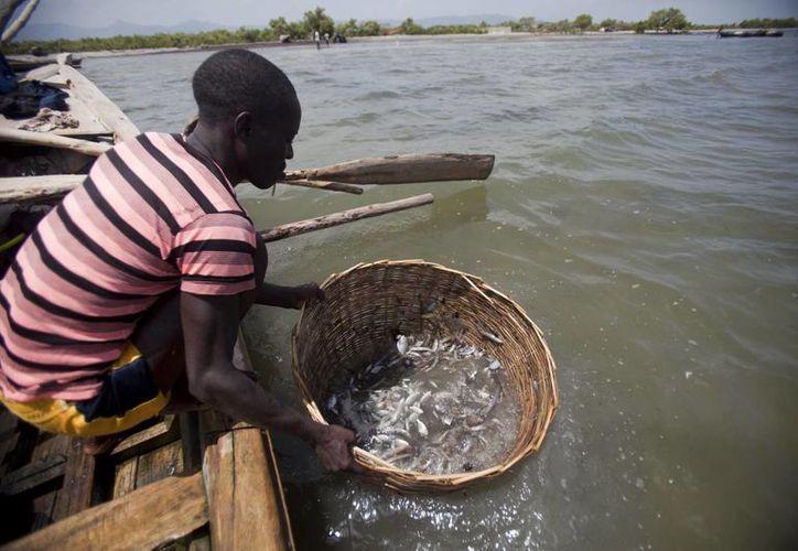Los haitianos se ven obligados a cruzar hacia aguas de República Dominicana para intentar capturar qué llevar de comer a sus familias. (AP)