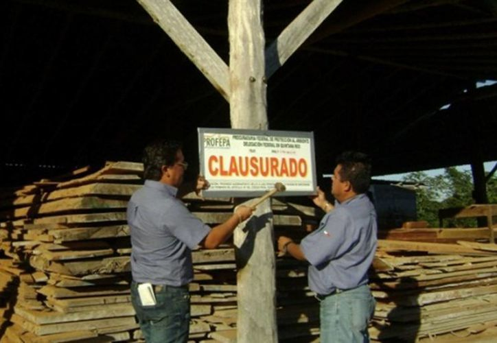 Aseguran más de 535 metros cúbicos de madera y clausuran un predio. (Claudia Martín/SIPSE)