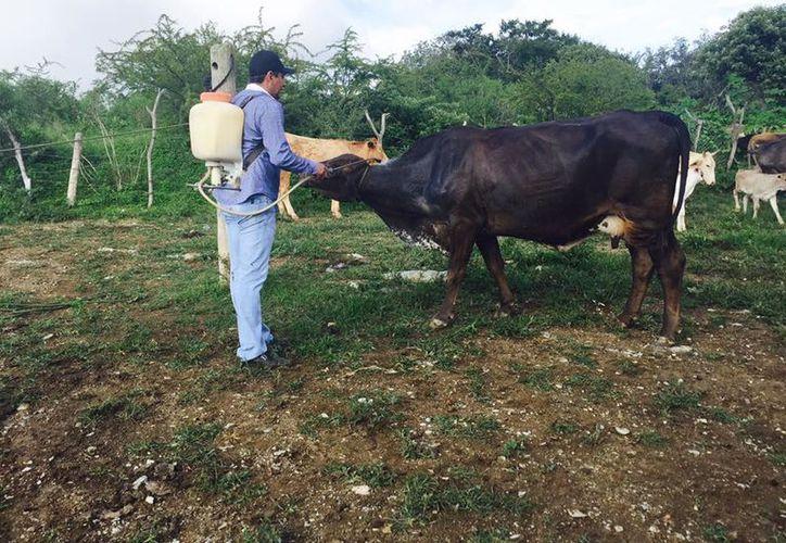 Durante este año recibieron cinco millones de pesos, que sólo alcanza para mantener activas las doce campañas de control de enfermedades. (Carlos Castillo/SIPSE)