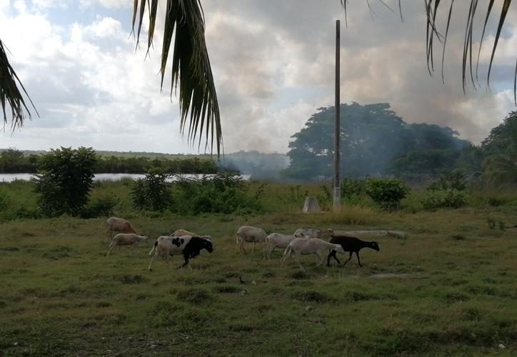 Las malas prácticas de actividades agrícolas basadas en la rosa, tumba y quema afectan a las zonas, de acuerdo con personal ambiental. (Carlos Castillo/SIPSE)