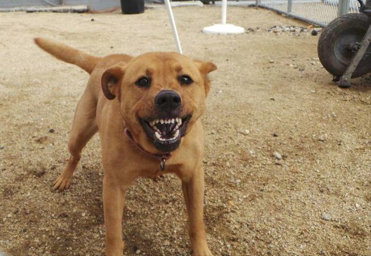 Perro en adopción fotografiado en el refugio de animales Downtown Dog Rescue de South Gate, California, el 4 de marzo del 2014. (Agencias)