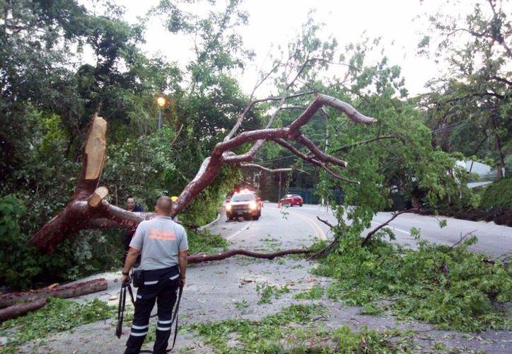 Las lluvias en Puerto Vallarta han ocasionado derrumbes, caída de árboles y desbordamiento de ríos. (Javier Santos/La Jornada).