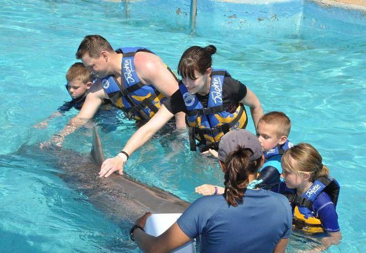 En cinco años el delfinario espera ser el líder a nivel mundial. (Foto de Contexto/Internet)