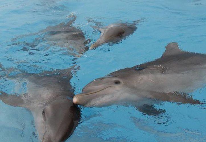 Los blogueros relacionados con el turismo verde, no aceptaron la decisión de realizar actividades con delfines, por la mala publicidad que ocasionaría. (Israel Leal/SIPSE)