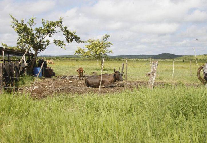 Estos proyectos están relacionados con actividades de cultivos, de ganadería, silvicultura, entre otros. (Archivo/SIPSE)