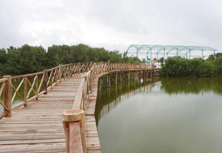 El puente es construido con postes de madera sin el uso de maquinarias. (Cortesía/SIPSE)