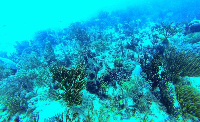 Señalan que no es viable instalar arrecifes artificiales. (Octavio Martínez/SIPSE)