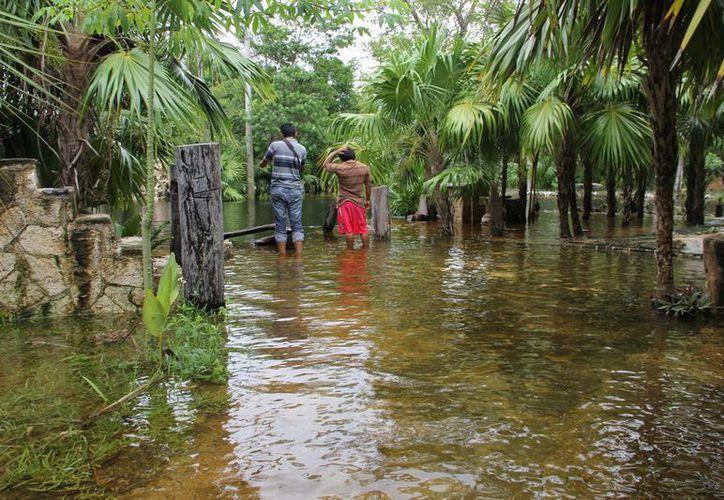 Permanecen inundadas las zonas cercanas a los cenotes. (Rossy López/SIPSE)