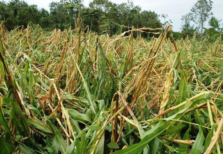 Para a estas fechas se deberían estar realizando las siembras dado que es el conocido período de lluvias, que sin embargo, no llegan. (Edgardo Rodríguez/SIPSE)