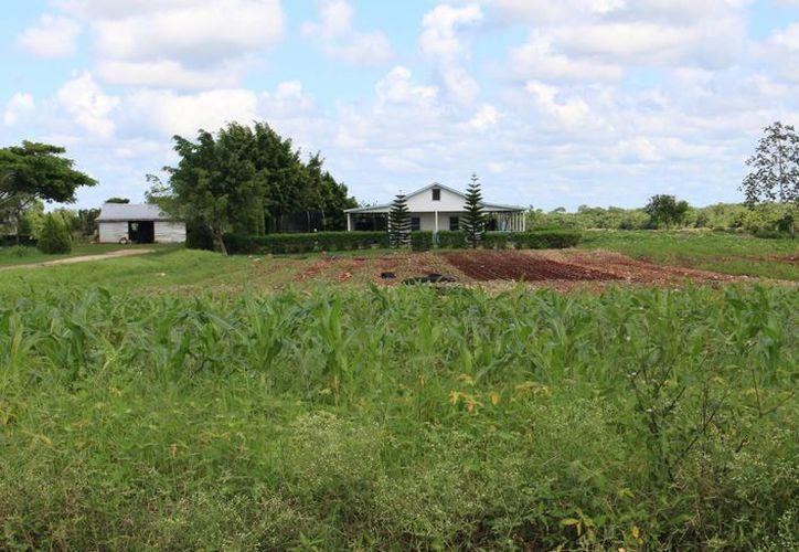 El estudio que se realizó en los campos de cultivo de soya dieron positivo en la mutación. (Ángel Castilla/SIPSE)