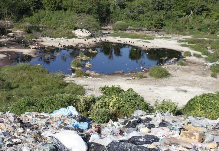 El líquido puede ocasionar contaminación al manto freático. (Carlos Horta/ SIPSE)
