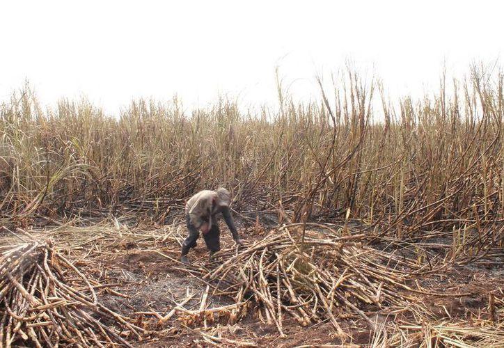 Se tienen reportadas lluvias esporádicas que han provocado retrasos en los trabajos de campo. (Edgardo Rodríguez/SIPSE)