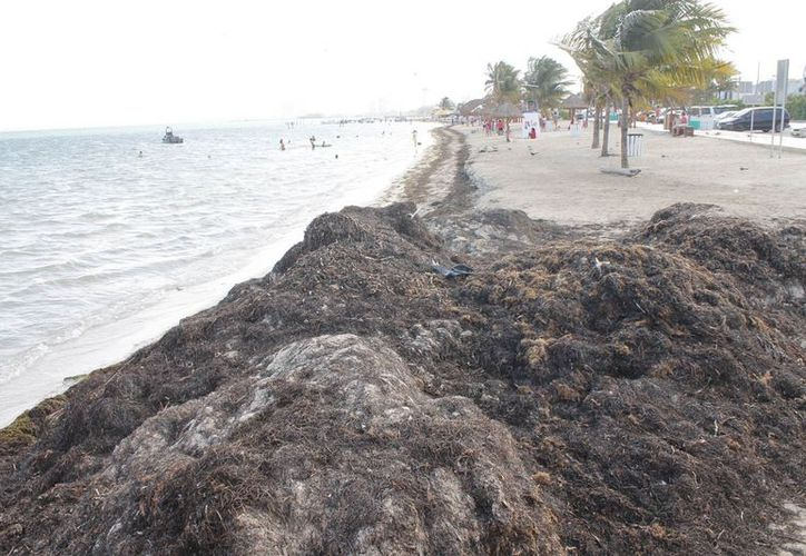 Anuncian rehabilitar la Playa del Niño, dotarla de mejores servicios y mayor limpieza. (Jesús Tijerina/SIPSE)