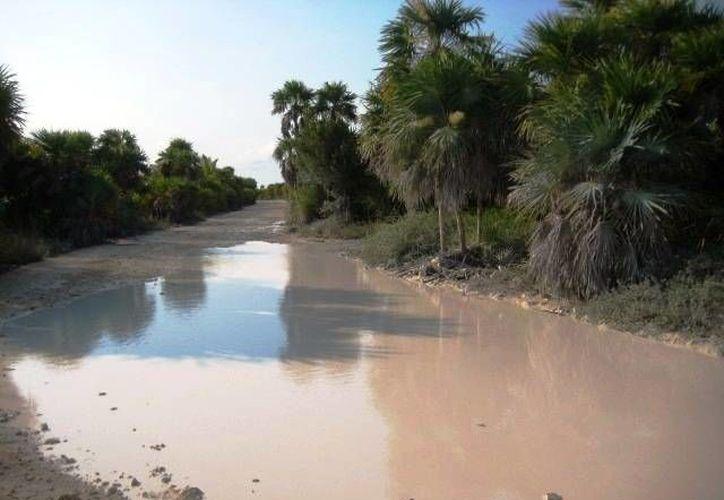 En algunas partes del camino el lodo llega a alcanzar los 30 centímetros de altura. (Rossy López/SIPSE)