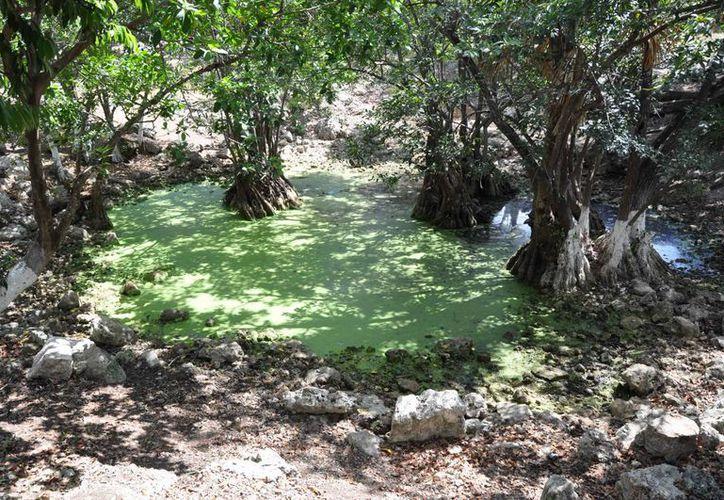 Algunos cenotes que se han localizado en el municipio cuentan con cierto grados de contaminación y basura. (Tomás Álvarez/SIPSE)