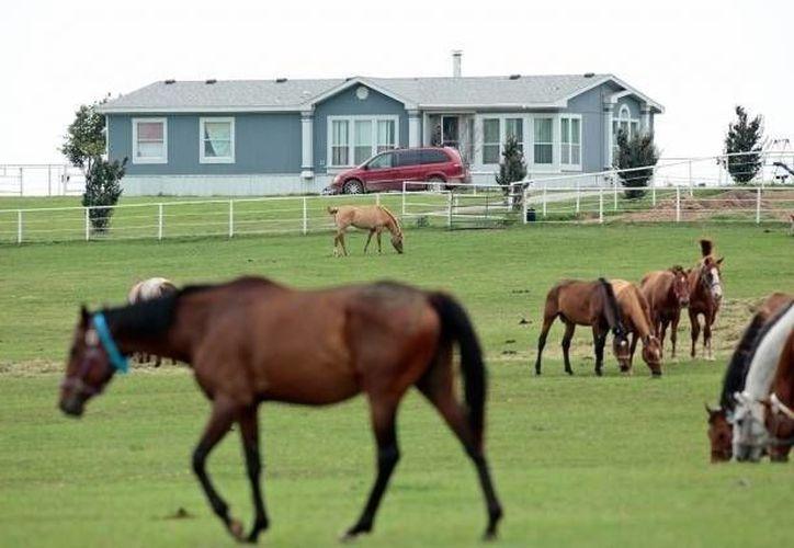 Aspecto del rancho Zule Farms donde fueron decomisados los caballos, en Lexington, Oklahoma. (Archivo/AP)