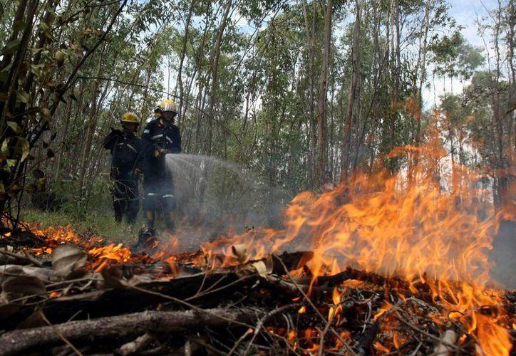 Esta mañana los bomberos del departamento de Maldonado (sureste) lograron apagar un incendio que afecto a al menos 90 hectáreas del Cerro del Toro, en la localidad turística de Piriápolis, en Uruguay. (EFE/Archivo)