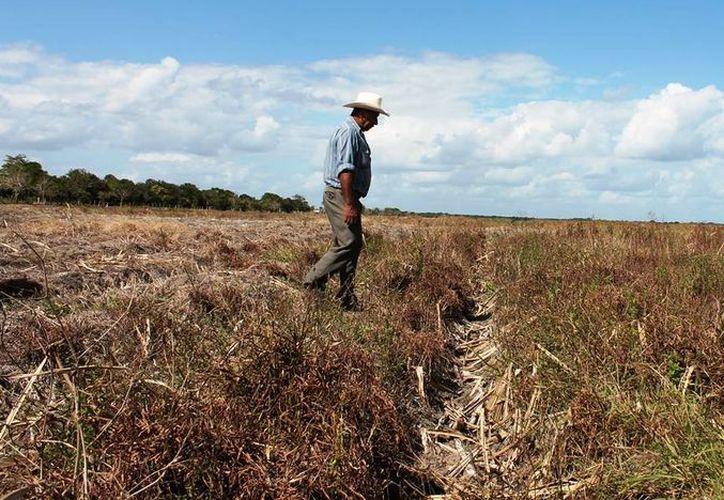 Productores agrarios del sur dicen estar decepcionados, pues contaban con los recursos prometidos por la Sagarpa. (Edgardo Rodríguez/SIPSE)