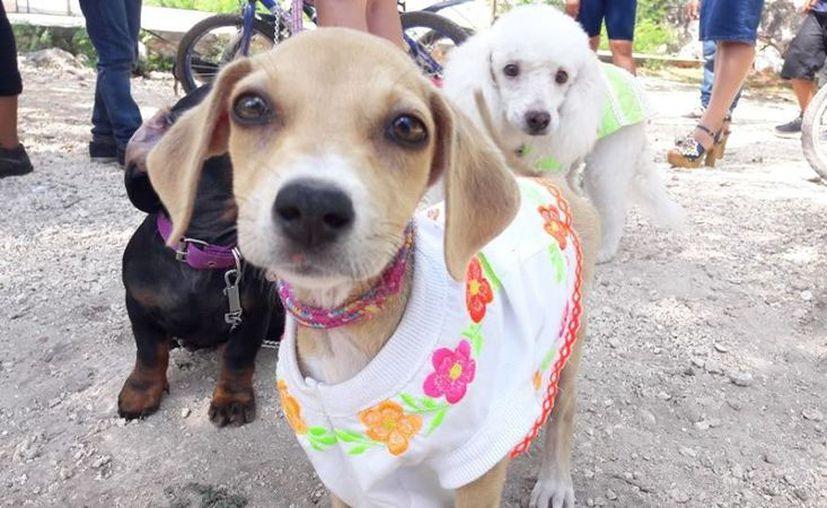 Asiste este sábado al evento y disfruta de las actividades junto a tus mascotas.